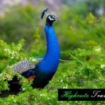 Highrute Travels Photography